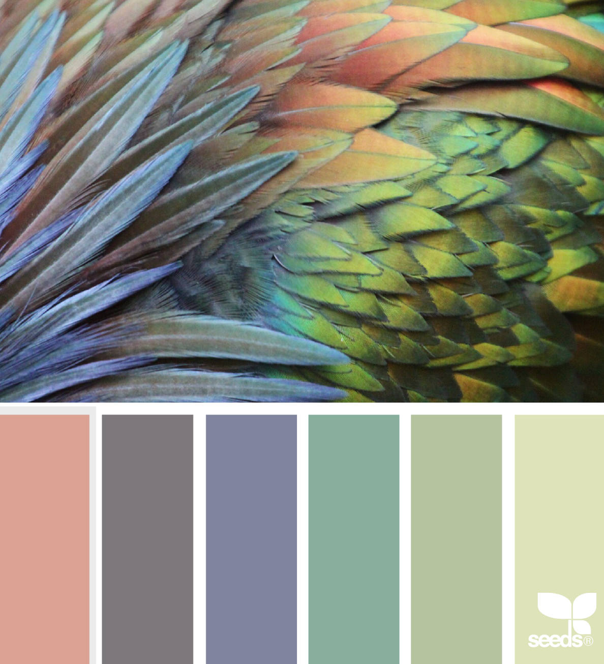 Color inspiration board from bird feathers