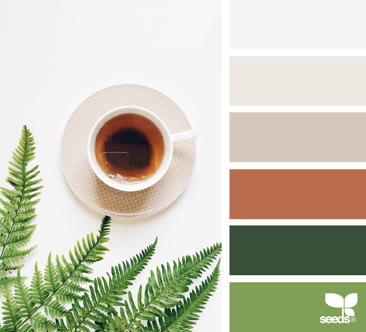 color inspiration board from photo of cup of coffee and fern